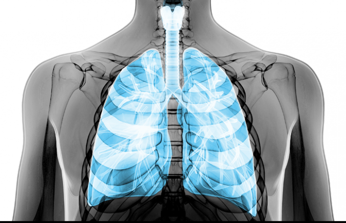 Illustration showing the lung in the upper body